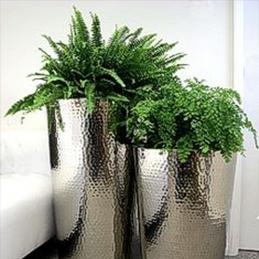 plantas113