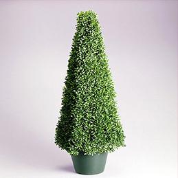 plantas12