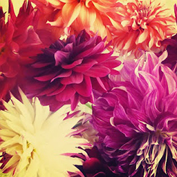 flores 7