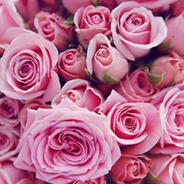 flores 9